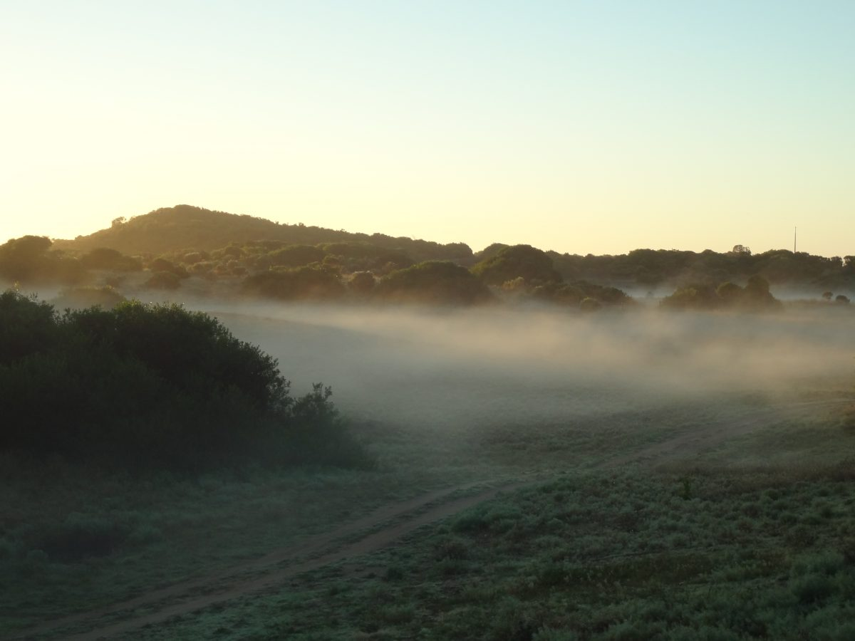 Mornings in Robe SA